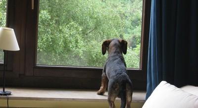News: Hunde in Mietswohnungen